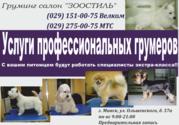Профессиональная стрижка собак и кошек. Минск