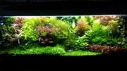 Удобрения(микро,  макро,  калий,  железо) для аквариумных растений. П0чт