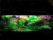 Удобрения(микро,  макро,  калий,  железо) для аквариумных растений. ПОЧТ2