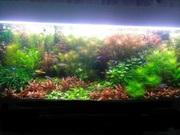 Удобрения(микро,  макро,  калий,  железо). Удо для аквариумных растений.