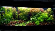 Удобрения(микро,  макро,  калий,  железо) для аквариумных растений. Почтн