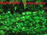 Низкорослые растения для переднего плана. Наборы растений для запуска.