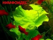 Нимфоидес. НАБОРЫ растений для ЗАПУСКА и ПЕРЕЗАПУСКА акваса/