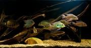 Аквариумные рыбки редкие виды в Наличии